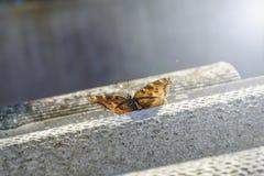 De foto van de vlinderlente royalty-vrije stock afbeeldingen