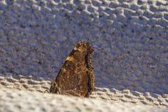 De foto van de vlinderlente stock fotografie
