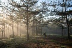 De fotograaf in mistig, zonsopgang in het bos, stralen en beautyful lichten Royalty-vrije Stock Foto