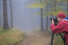 De fotograaf neemt beelden van het magische de herfstbos in dark royalty-vrije stock afbeelding