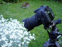 De fotograaf van de hobby in actie stock afbeeldingen