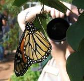 De Fotograaf van de vlinder Stock Afbeeldingen