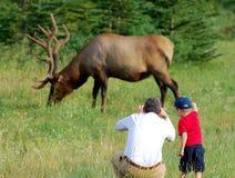 De fotograaf van elanden Stock Afbeelding
