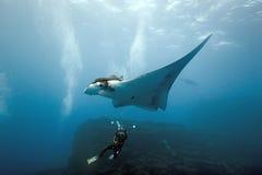 De fotograaf van Manta en van de duiker op de ertsader Stock Fotografie