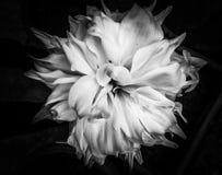 De fotografieportretten van de bloemenkunst royalty-vrije stock foto