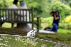 De fotospruit van het huwelijk Stock Afbeeldingen