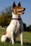 De Fox-terrier van het stuk speelgoed Stock Afbeelding