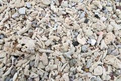 De fragmenten van het textuurkoraal op de de strandenachtergrond en textuur Stock Afbeelding