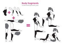De fragmenten van lichaam voor gymnastiek- aantonen stelt Vectorsilho Stock Afbeeldingen