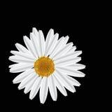 De frame bloem. Vierkant. stock illustratie