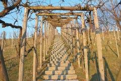 De Frames van de wijnstok Stock Afbeeldingen