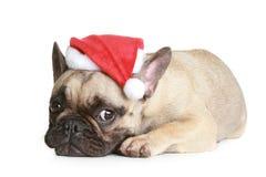 De Franse buldog in Kerstmishoed ligt Stock Foto