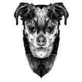 De Franse hoofdschets van de herdershond Stock Afbeeldingen