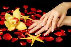 De Franse manicure, nam bloemblaadjes en orchidee toe royalty-vrije stock fotografie