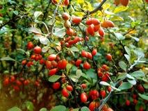 De fruitbomen Royalty-vrije Stock Foto's