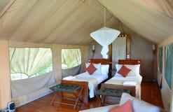 De Galapagos Safari Camp Tent Interior Stock Foto's