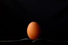 De gallina todavía del huevo una vida fotos de archivo libres de regalías