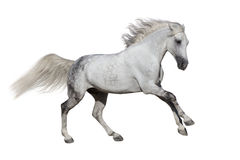 De galop van de paardlooppas stock foto