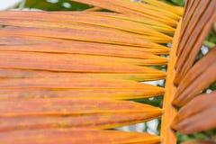 De gamla palmbladen Arkivfoto