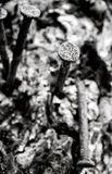 De gamla spikar bultat på trädet royaltyfri bild