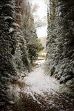 De gang tussen lange die pijnboombomen met sneeuw worden behandeld De donkere en sombere passage in het hout Royalty-vrije Stock Afbeelding