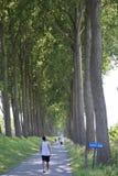 De gang van België tussen bomen stock afbeelding