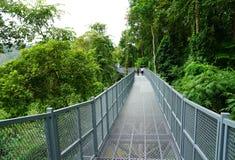 De Gang van de boomluifel, de Ijzerbrug in het tropische bos Stock Foto's