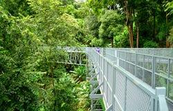 De Gang van de boomluifel, de Ijzerbrug in het tropische bos Royalty-vrije Stock Afbeelding