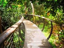 De Gang van de boomluifel in Zuid-Afrika Houten Brug royalty-vrije stock foto