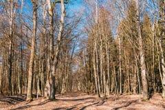 De Gang van de de Steegweg van de plattelandsweg door Eiken Autumn Forest Wit Stock Foto's