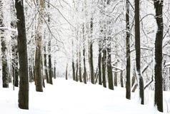 De gang van de sneeuw in de winterbos royalty-vrije stock afbeelding