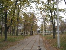 de gang van de de herfstdag langs de steeg van het stadspark stock fotografie