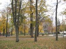 de gang van de de herfstdag langs de steeg van het stadspark royalty-vrije stock foto's