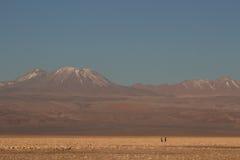 De gang van het Atacamapaar Stock Foto