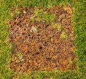 De gang van het gras en van de baksteen. Royalty-vrije Stock Fotografie