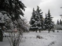 De gang van de de wintermiddag langs de mening van de stadsstraat van de snow-covered bomen stock afbeelding