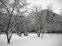 De gang van de de wintermiddag langs de mening van de stadsstraat van de snow-covered bomen stock foto