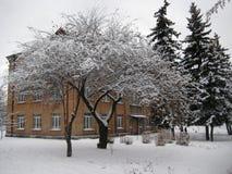 De gang van de de wintermiddag langs de mening van de stadsstraat van de snow-covered bomen stock afbeeldingen