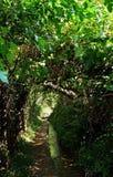De gangen tussen de tuinen royalty-vrije stock fotografie