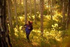 De gangen van de wandelaarmens in de pijnboom gele herfst bosbackpacker geniet van gouden dalingslandschap Stock Foto
