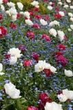 De gardenia en vergeten me niet royalty-vrije stock afbeeldingen