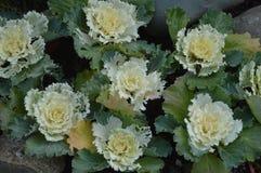 de gare Belle fleur de fleurs blanches en hiver Photo libre de droits