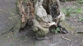 De gargouilles van de de dryadesbaby van de beukboom stock foto's