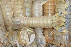 De garnalen van bidsprinkhanen Stock Fotografie