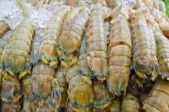 De garnalen van bidsprinkhanen met ijs Royalty-vrije Stock Foto's
