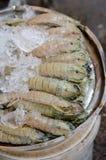 De garnalen van bidsprinkhanen met ijs Royalty-vrije Stock Afbeelding