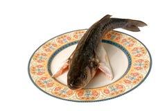 De gastronomische van overzeese zeebaars vissenspigola Royalty-vrije Stock Foto's