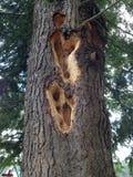 De gaten van de specht in een boom royalty-vrije stock foto