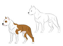 De geïllustreerdea stier van de Kuil Stock Foto's