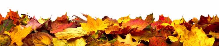 De geïsoleerde banner van de herfstbladeren Royalty-vrije Stock Fotografie
